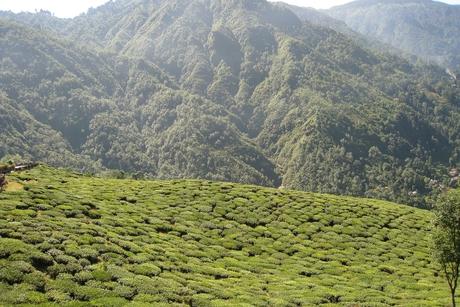 A Lemon Tree Hotel in Darjeeling – a new venture signed